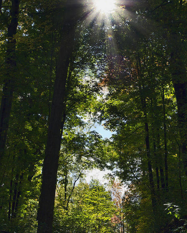 Fall Poster featuring the photograph Into The Light by Peter Chilelli