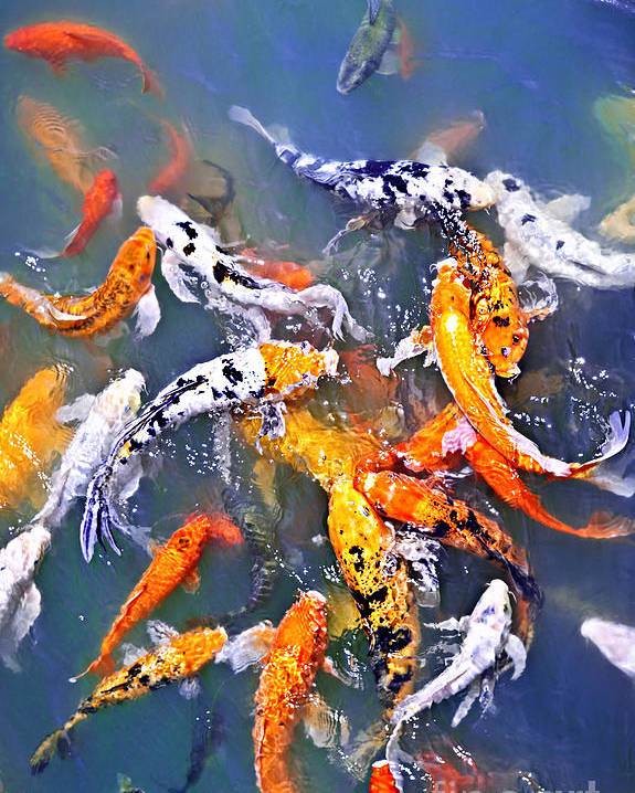 Koi Poster featuring the photograph Koi Fish In Pond by Elena Elisseeva