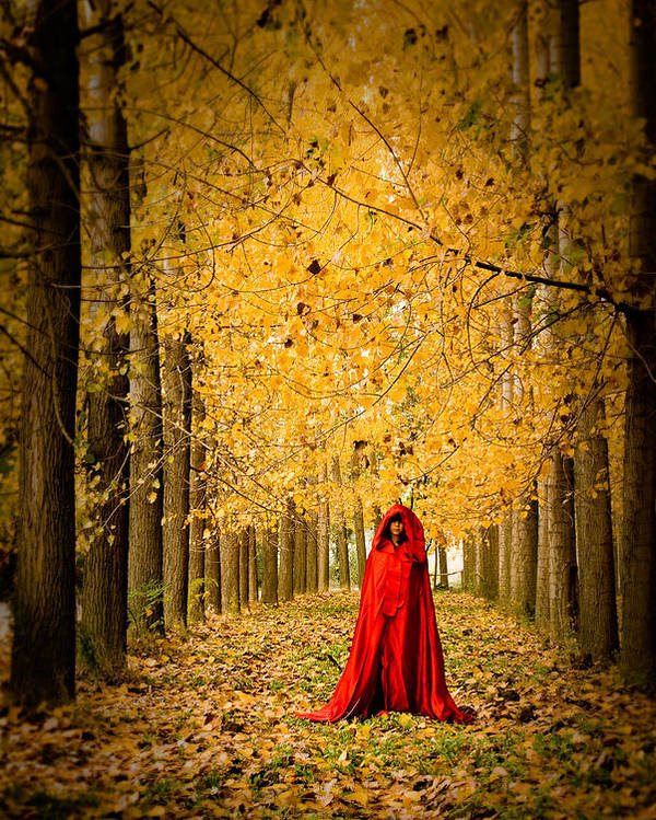 Trees Poster featuring the photograph Lady In Red - 5 by Okan YILMAZ