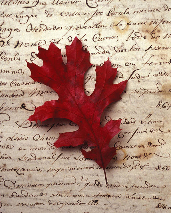 Leaf Poster featuring the photograph Leaf On Letter by Garry Gay