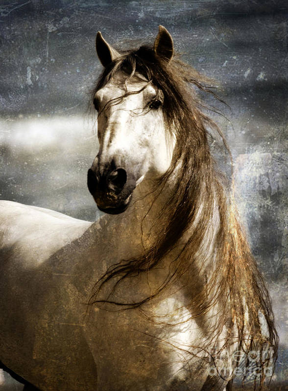 Equine Art Poster featuring the photograph Liberty by Patty Hallman