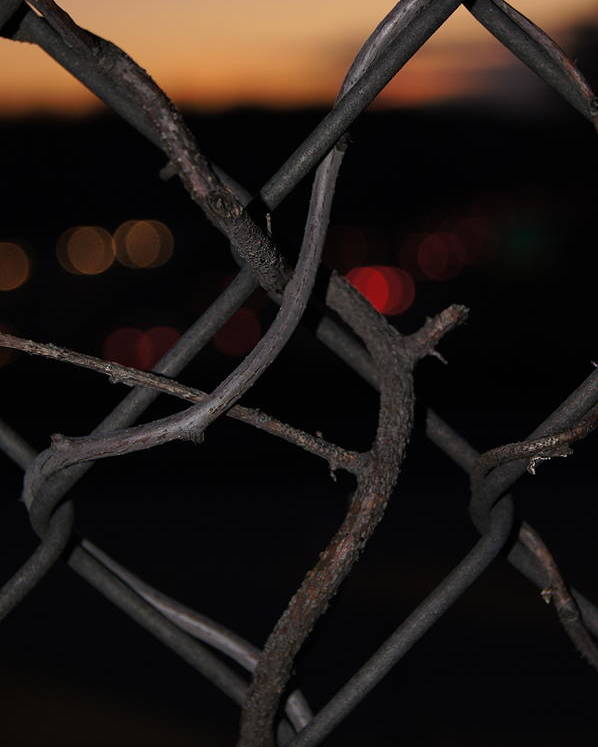 Sunset Fence Poster featuring the photograph Life Will Find A Way by Anthony Intagliata