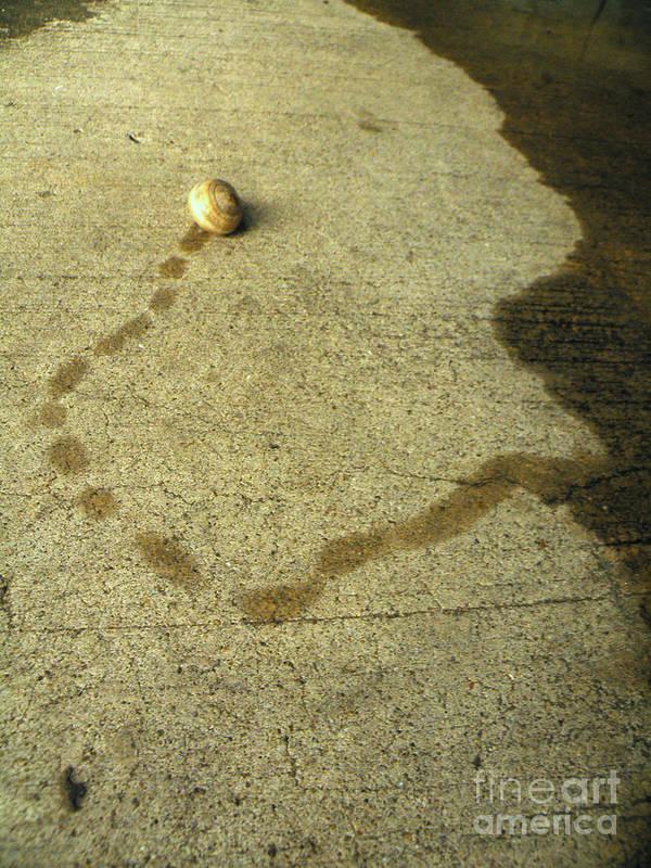 Snail Poster featuring the photograph Lifes U Turns by Joe Jake Pratt