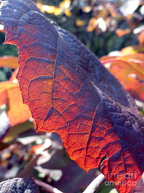 Leaves Poster featuring the photograph Light Of The Lifeblood by Trish Hale