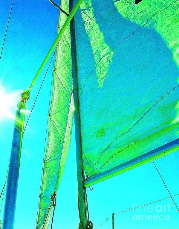 Sailboats Poster featuring the photograph Lines And Sheets by Julie Lueders