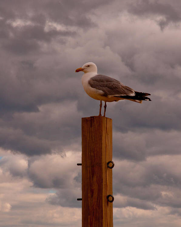 Bird Poster featuring the photograph Lone Sentry by Andrew Bear