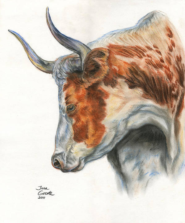 Cattle Poster featuring the drawing Longhorn by Jana Goode