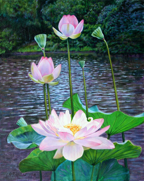 Lotus Poster featuring the painting Lotus by John Lautermilch