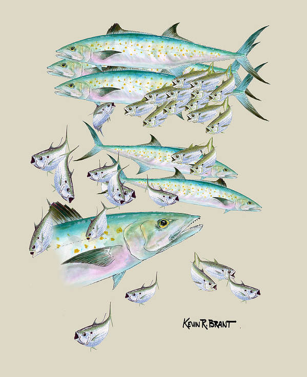 Mackerel Poster featuring the painting Mackerel Montage by Kevin Brant