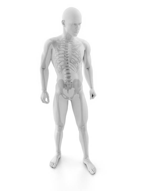 Artwork Poster featuring the photograph Male Skeleton, Artwork by Sciepro