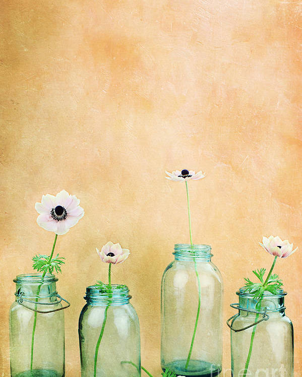 Flower Poster featuring the photograph Mason Jars by Stephanie Frey