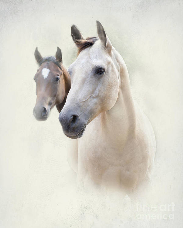 Horse Poster featuring the photograph Misty by Betty LaRue