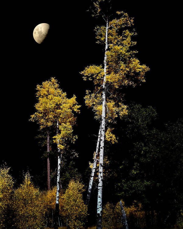 Aspens Poster featuring the photograph Mogollon by Jim Painter