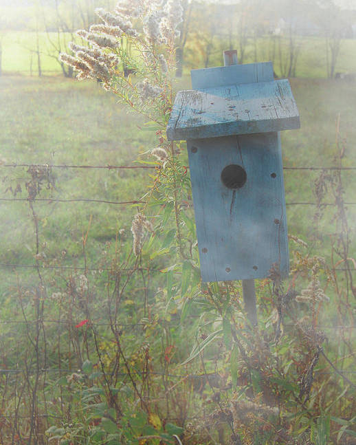 Birdhouse Poster featuring the photograph Morning Fog by Mark Dottle