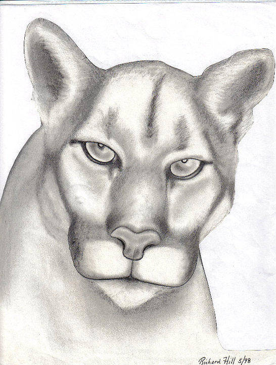 Portraits Poster featuring the drawing Mountain Lion by Rick Hill