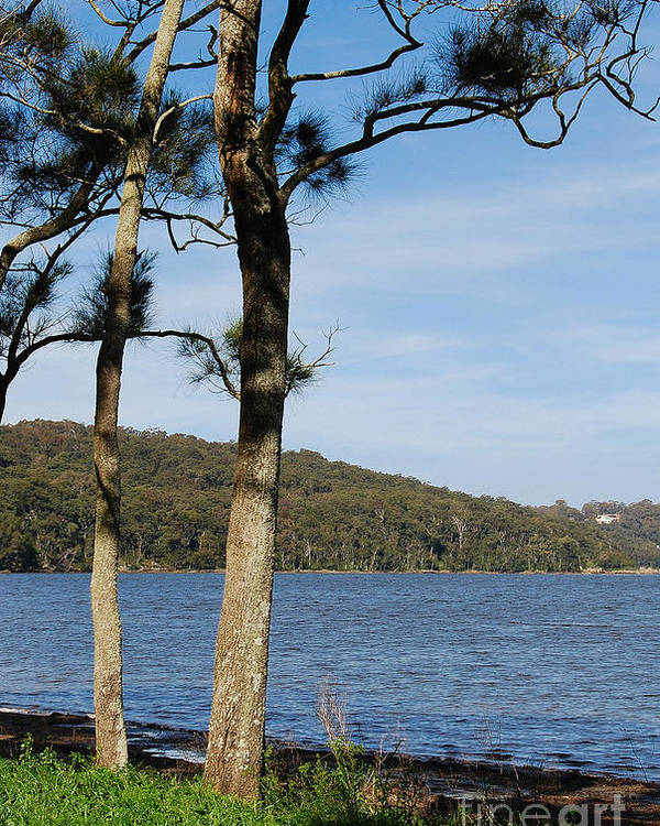 Australia Poster featuring the photograph Myuna Bay Foreshore by Fran Woods