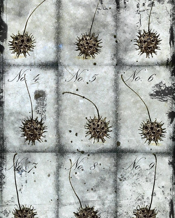 Nine Poster featuring the photograph Nine Seed Pods by Carol Leigh