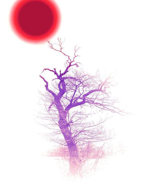 Red Sun Sunlight Tree Trees Color Colorful Abstract Fog Mist Poster featuring the digital art Nippon Sunset 2 by Steve K