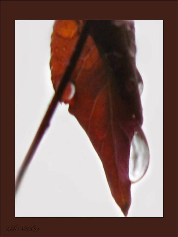 Nurture Poster featuring the photograph Nurture by Debra   Vatalaro