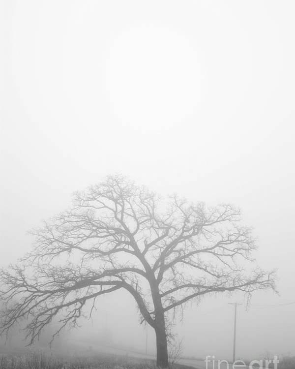 Denver Colorado Poster featuring the photograph Oak Tree In Fog by David Bearden