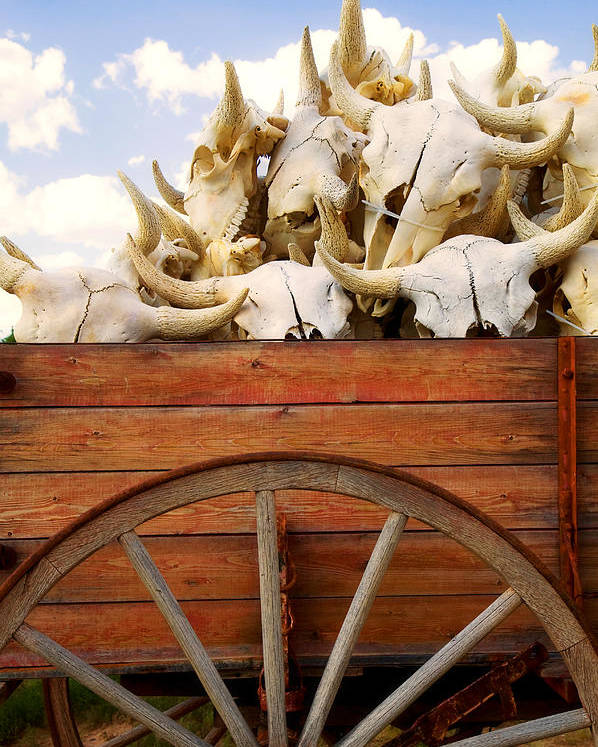 Buffalo Skulls Poster featuring the photograph Old Wagon Full Of Buffalo Skulls by Garry Gay
