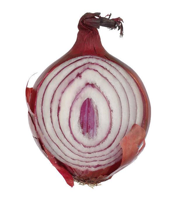 Frank Tschakert Poster featuring the photograph Onion by Frank Tschakert
