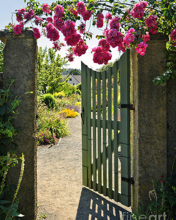 Gate Poster featuring the photograph Open Garden Gate With Roses by Elena Elisseeva