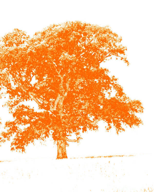 Art Poster featuring the photograph Orange Oak by Alan Look