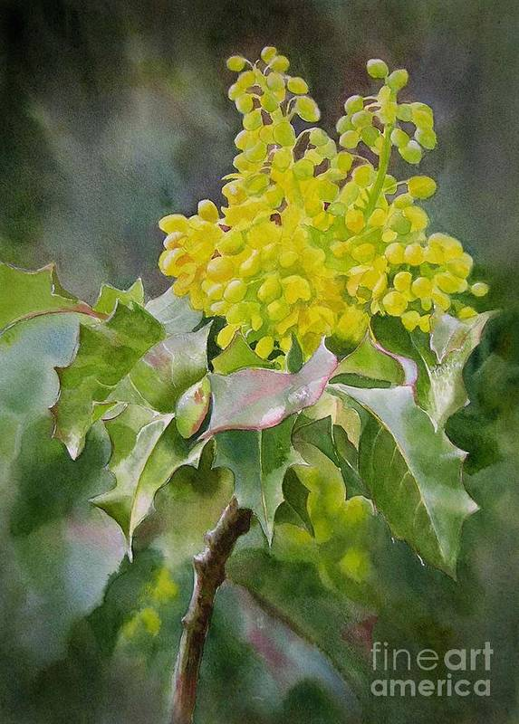 Oregongrape Poster featuring the painting Oregon Grape by Sharon Freeman