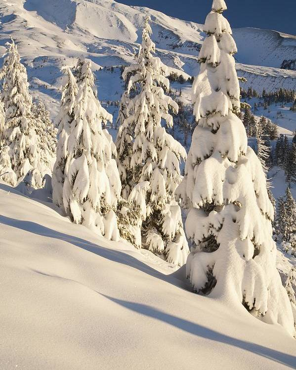 Mountain Poster featuring the photograph Oregon, United States Of America Snow by Craig Tuttle