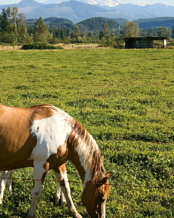Horse Poster featuring the photograph Paint Horse And Mount Rainier by Stacey Lynn Payne
