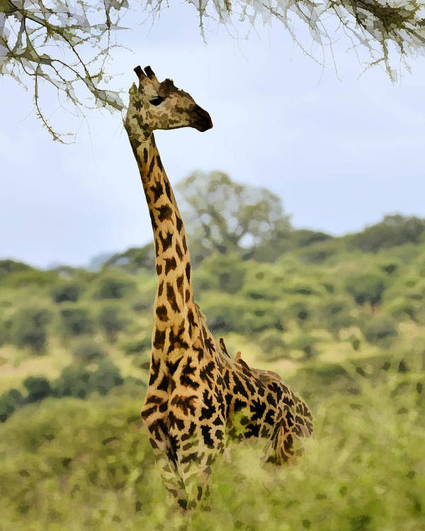Africa Poster featuring the photograph Painted Giraffe by Jack Daulton