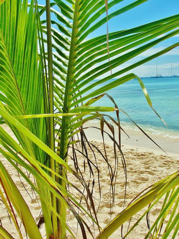 Beach Poster featuring the photograph Palm Beach by Marie-france Quesnel