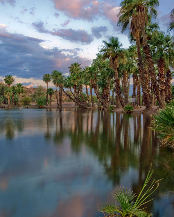 Abstract Poster featuring the photograph Palms Trees Over Papago Lake by Dave Dilli