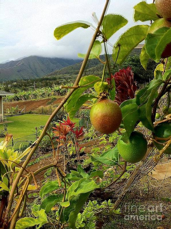 Landscape Poster featuring the photograph Passionfruit On The Vine With A View Of The Valley  Maui by J R Stern