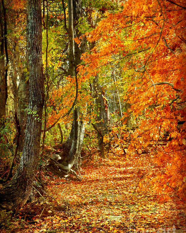 Autumn Poster featuring the photograph Pathway Through Autumn Woods by Cheryl Davis