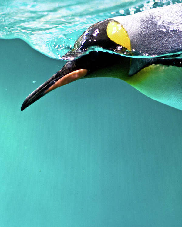 Vertical Poster featuring the photograph Pinguin by Www.photo-chick.com