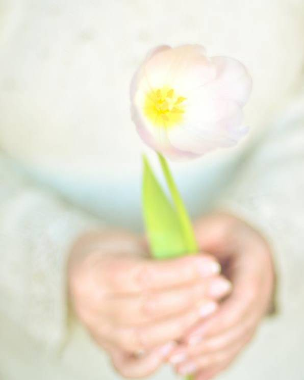 Adult Poster featuring the photograph Pink Tulip In Womans Hands by Photo by Ira Heuvelman-Dobrolyubova