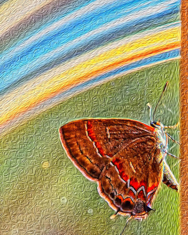 Butterfly Poster featuring the photograph Playroom Butterfly by Bill Tiepelman