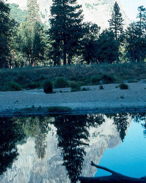 Ponderosa Pine Poster featuring the photograph Ponderosa Reflections by Chris Gudger
