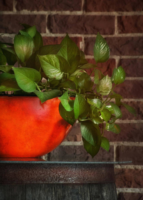 Ivy Poster featuring the photograph Pot Of Greens by Brenda Bryant