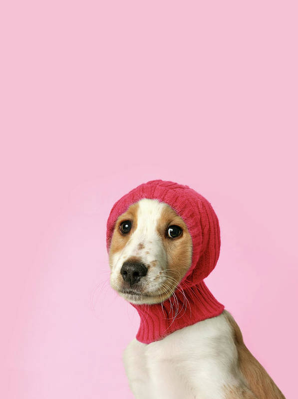 Vertical Poster featuring the photograph Puppy With Hat by Retales Botijero