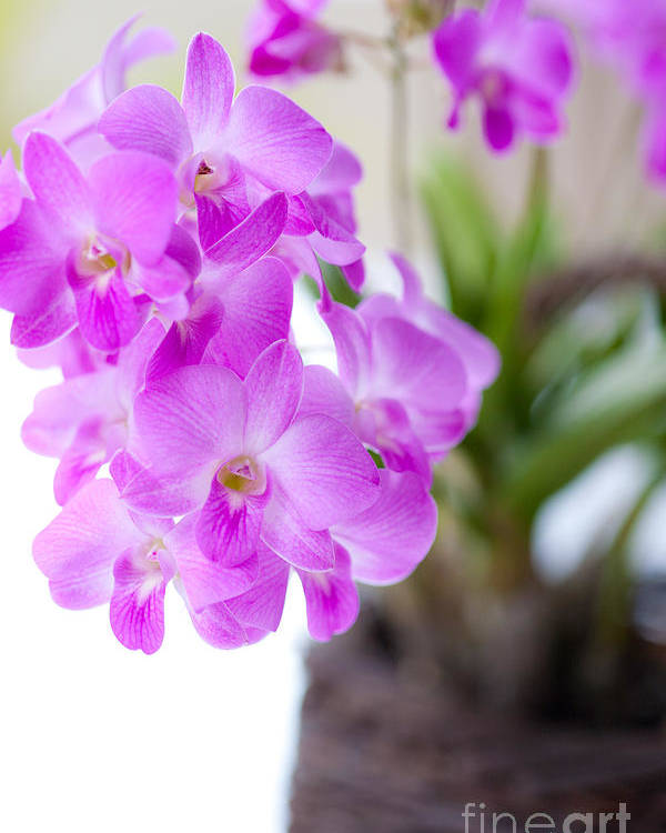 Backgrounds Poster featuring the photograph Purple Mini Orchids by Juriah Mosin