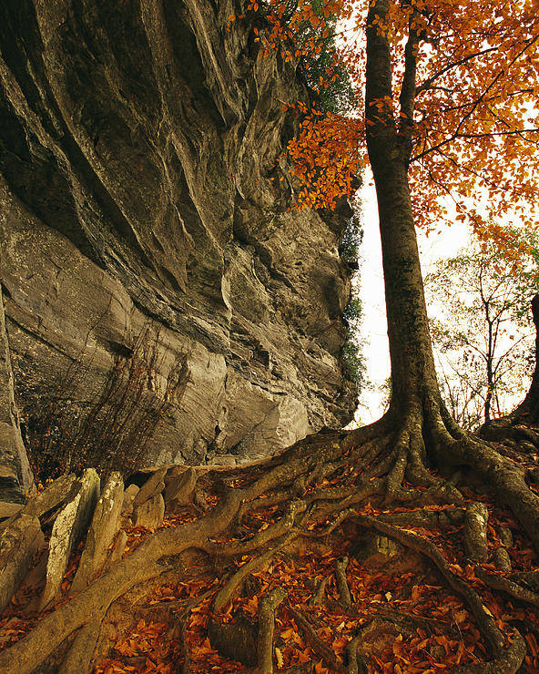 North America Poster featuring the photograph Raven Rock And Autumn Colored Beech by Raymond Gehman
