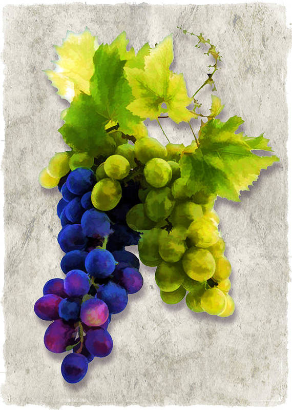 Wine Poster featuring the painting Red And White Grapes by Elaine Plesser