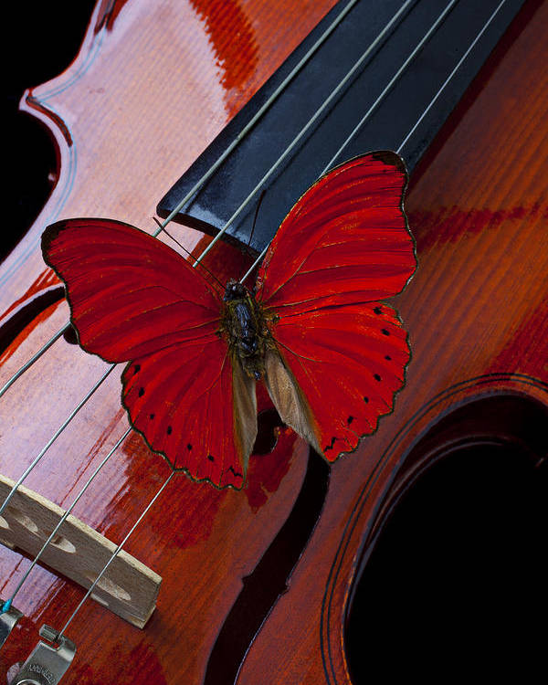 Red Poster featuring the photograph Red Butterfly On Violin by Garry Gay