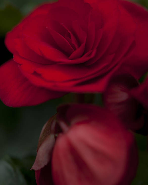 Flower Poster featuring the photograph Red Flower by Kelvin Andow