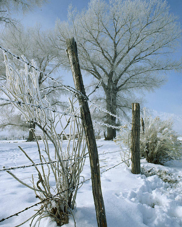 Barbed Wire Poster featuring the photograph Rime From Rare Fog Coats Fence by Gordon Wiltsie