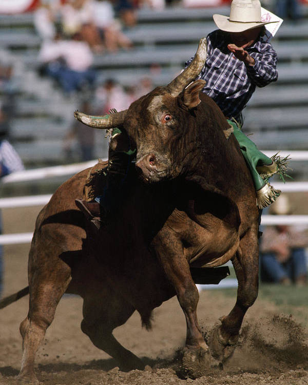 Day Poster featuring the photograph Rodeo Competitor In A Steer Riding by Chris Johns