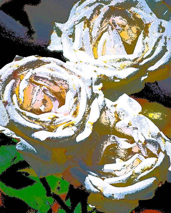 Floral Poster featuring the photograph Rose 126 by Pamela Cooper